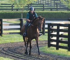 Three Chimneys Big Brown, the 2008 Derby winner, now divides his time between Australia and Kentucky. Horse Fly, Race Horses, Horse Racing, Horse Story, Derby Horse, Derby Winners, Churchill Downs, Big Brown, Thoroughbred Horse