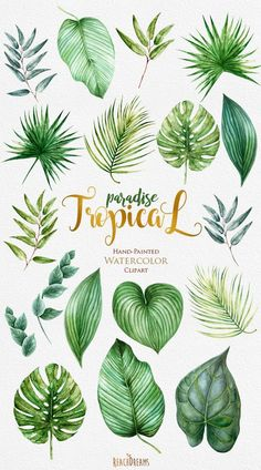 Tropic Clipart Tropical Watercolor Leaves Bright by ReachDreams . - Image + Tropic Clipart bright tropical watercolor leaves from ReachDreams . Palm Tree Leaves, Tropical Leaves, Palm Trees, Green Leaves, Tropical Flowers, Hawaiian Flowers, Hawaiian Names, Watercolor Leaves, Watercolor Paintings
