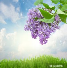 Fotomural Lilas flores en día soleado • Pixers® - Vivimos para cambiar Golf Courses, Plants, Inspire Others, Vinyls, Get A Life, Scenery, Flowers, Flora, Plant