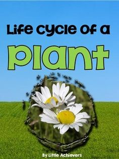 Life Cycle of a Plant #FREE