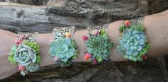 Succulent Cuff Corsage Bracelet - Live ***Disclaimer: All succulent wedding arrangements including bouquets, bouts, corsages, hair combs, crowns etc. are outsourced to our awesome floral partner Amb Prom Flowers, Diy Wedding Flowers, Bridal Flowers, Wedding Bouquets, Floral Wedding, Prom Corsage And Boutonniere, Bridesmaid Corsage, Corsages, Boutonnieres