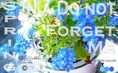 La Primavera in un Non Ti Scordar di Me - Spring in a Do not Forget Me Dopo un fine settimana grigio finalmente una stupenda giornata di sole e quindi la voglia di sistemare un pò il balcone...in questo periodo sono assorbita da diversi problemini privati e un pò di relax ci vuole! http://graficscribbles.blogspot.it/…/la-primavera-in-un-non… #nontiscordardime #miosotis #palettecolori