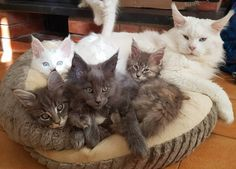 Mom and the Kits