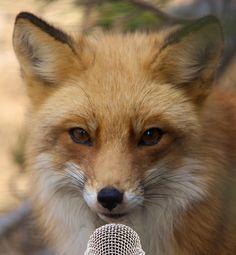 fox - Google 검색