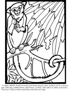 Colouring-in page - sample from 'Rain Forest Wildlife Stained Glass Coloring Book' via Dover Publications ~s~