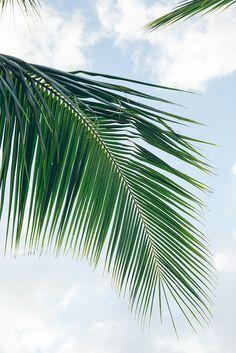 The spirit of aloha.