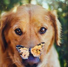 Esto demuestra que los perros son inofensivos  #goldenretriever