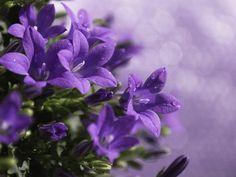 фиолетовые цветы - Cerca con Google
