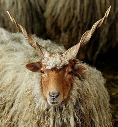 .Spectacular Horns