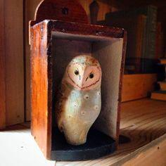 Barn owl in shadow box. 50littlebirds.com