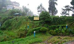 The Eco Garden at Batasia Loop