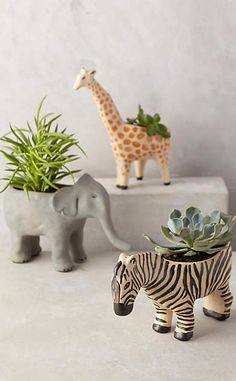 Wild Wanderer Planter #anthroregistry