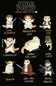 """""""Star Paws"""" Staring Waffle The Cat"""