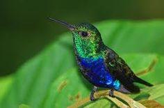 colorful hummingbirds - Google Search