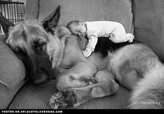 Instant Bond • dog dogs puppy puppies cute doggy doggies adorable funny fun silly photography