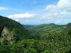 Monteverde forests