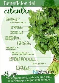 Beneficios del Cilantrillo
