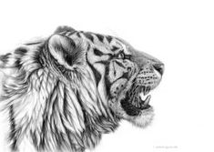 White Tiger profile G001