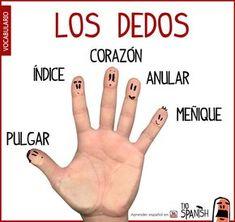 El nombre de los dedos en español, vocabulario español