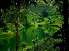 via Flickr  Lush green hills of Sri Lanka.  Photo by dinusha123.  https://www.facebook.com/WorldwideCollection
