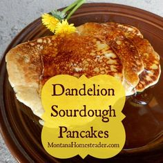 Dandelions are quite tasty in a variety of foods, especially these dandelion sourdough pancakes we served with homemade dandelion syrup. So delicious! Sourdough Pancakes, Sourdough Recipes, Pancakes And Waffles, Fluffy Pancakes, Dandelion Recipes, Whole Food Recipes, Cooking Recipes, Tasty, Tortilla Wraps