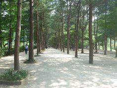 韓國 南伊島