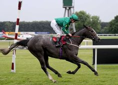 THIRD STAKES WINNER FOR FRANKEL - SAHorseracing.COM - South African Horseracing…