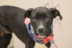 NAME: Parker  ANIMAL ID: 30598466  BREED: Retriever mix SEX: male  EST. AGE: 1 yr Est Weight: 41 lbs  Health: heartworm neg  Temperament: dog friendly, people friendly  ADDITIONAL INFO: RESCUE PULL FEE: $49  Intake date: 1/13  Available: Now