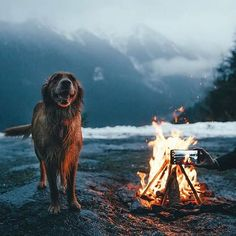 RV And Camping. Ideas To Help You Plan A Camping Adventure To Remember. Camping can be amazing. You can learn a lot about yourself when you camp, and it allows you to appreciate nature more. There are cheerful camp fires and hi Animals And Pets, Cute Animals, Funny Animals, Baby Animals, Into The Wild, Tier Fotos, Go Camping, Camping Dogs, Luxury Camping