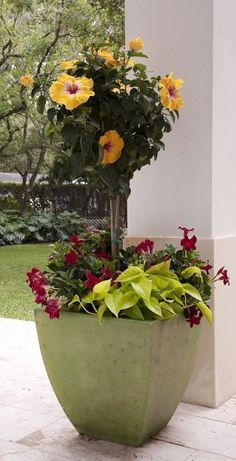 Tropical hibiscus and mandevilla create an instant garden when paired in a pretty pot. Photo: HANDOUT, HO / MCT
