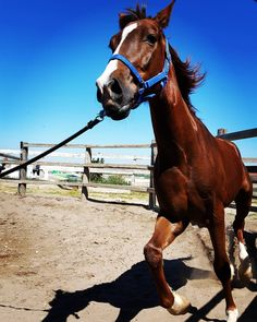 Caballo / Horse.  #diariodeuninstagramer