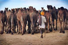 Private Day Trip to Pushkar from Jaipur to Jodhpur #TICKITBOOKIT #India #Thingstodoinjaipur #CityToursinjaipur #SightseeingTourinjaipur