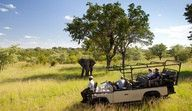 Close encounters with Africa's magnificent wildlife create unforgettable memories on the early morning and late afternoon game drives through the Ulusaba Private Game Reserve.  http://www.south-african-hotels.com  http://www.south-african-lodges.com