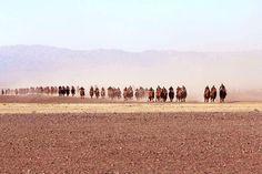1000 camels festival Gobi desert Mongolia