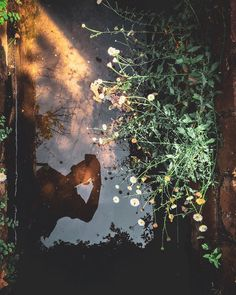 #reflection #iphone #selfie #flowers #water #silhouette #photography #nature #plants Silhouette Photography, Nature Plants, Selfie, Iphone, Reflection, Sidewalk, Instagram Posts, Flowers, Pictures
