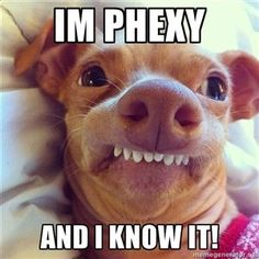 LOVE Phteven the Dog .. The more I look at him, the funner it gets