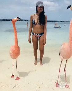 Fun at the beach – Gif