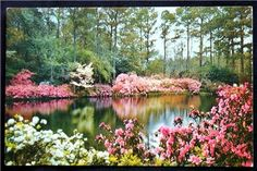 Bellingrath Gardens, Mobile, AL