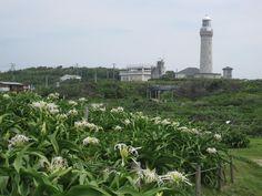 スコットランド出身で、「日本の灯台の父」とも称されるリチャード・ヘンリー・ブラントンの設計。日本海初の洋式灯台です。歴史的価値が高く、日本の灯台50選にも選ばれています。 灯台守の旧宿舎は復元され資料館として公開されています。  角島夢崎波の公園 角島灯台公園に隣接する公園。角島灯台設計者のプラントンにちなんで造られた英国風の公園で、ハマオモト(ハマユウ)が自生します。ハマオトモは下関市指定天然記念物です。