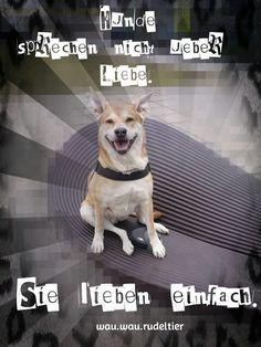 mehr gibt es auf facebook.de/wau.wau.rudeltier © Inga Wernken