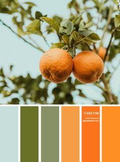 Orange Color Schemes, Orange Palette, Orange Color Palettes, Color Schemes Colour Palettes, Nature Color Palette, Green Colour Palette, Hue Color, Colours, Color Combos