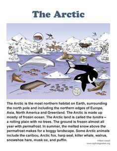 Arctic poster for grades - Antarctica Arctic Habitat, Diorama Kids, Ecosystems Projects, Learning Websites For Kids, Artic Animals, Penguins And Polar Bears, Arctic Tundra, Animal Posters, Classroom Fun