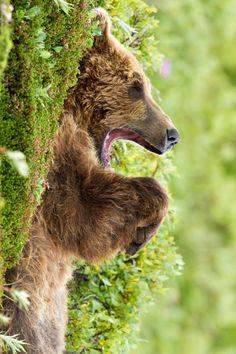 happy bear! =D