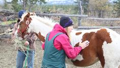 'Dr. Oakley, Yukon Vet' cares for creatures great and small in the Great White North