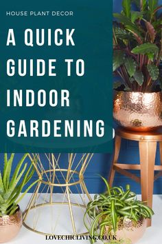 Here's everything you need to know about indoor gardening and house plant care! Whether you're looking for care guides for low light houseplants, the best home decor for houseplant aesthetic or how to start an indoor garden; this post has you covered! House Plants Decor, Plant Decor, Best Grow Lights, Indoor Plants, Indoor Gardening, Indoor Greenhouse, Growing Plants Indoors, House Plant Care, Shop Interiors