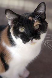 Sweet adoptable female, came from a horder situation, needs good home, see site for details