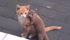 猫と色々な動物 13 ねこLatte+