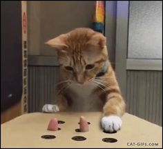 CAT GIF • Funny ginger Cat playing Whack a mole with human finger right meow it is Whack a finger