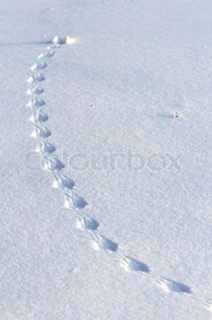 Image of 'Animal tracks in snow' - Colourbox