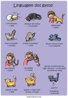 Linguagem dos Gatos !
